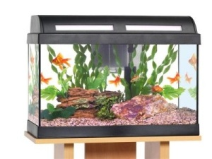 Online Buying & Caring Tips for Japanese Koi Fish1